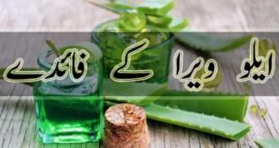 benefits of aloe vera in urdu
