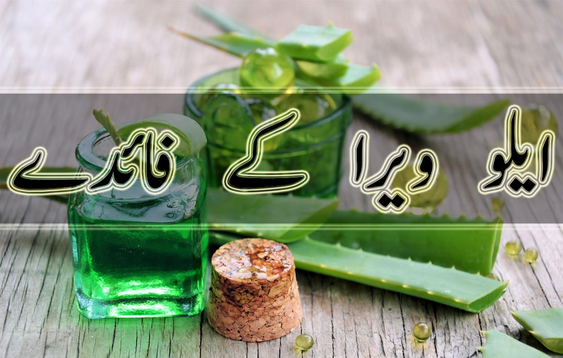Uses and Benefits of Aloe Vera in Urdu
